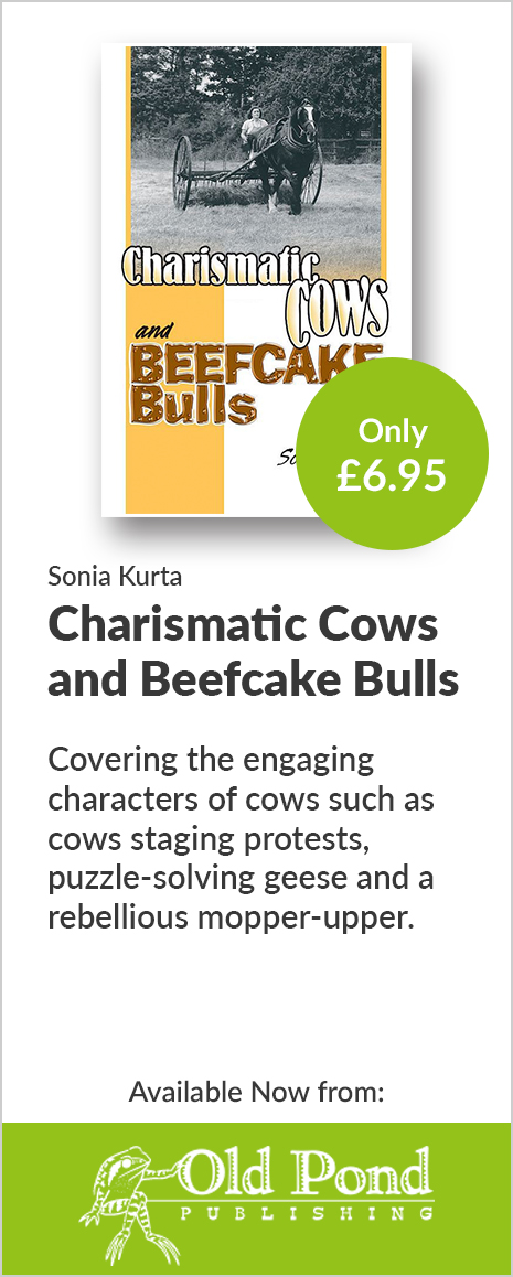 Charismatic Cows and Beefcake Bulls - Old Pond Publishing