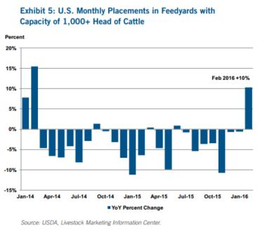 CoBank Cattle Report