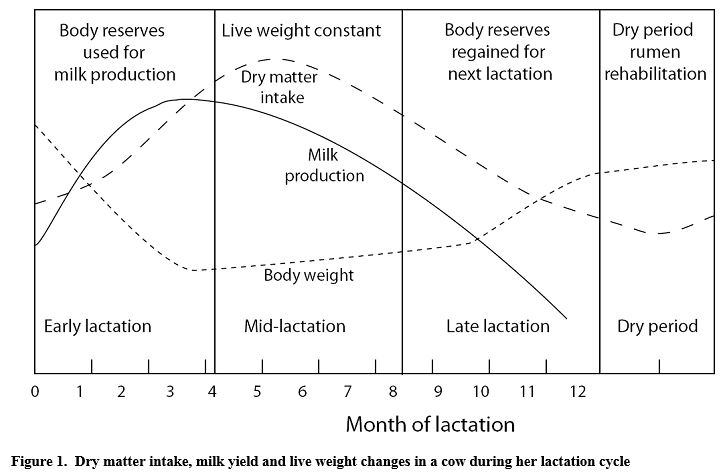 production cycle of a dairy cow Fsh and lh production is  this animated diagram illustrates the morphological changes that occur on the ovary throughout the cow and heifer's estrous cycle.