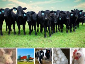 Study: Economic Ripple Effect of Livestock Operations in Indiana